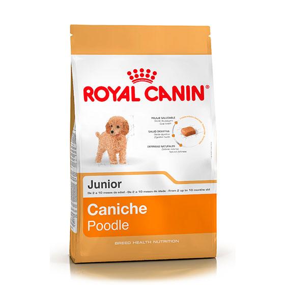 caniche-jr-